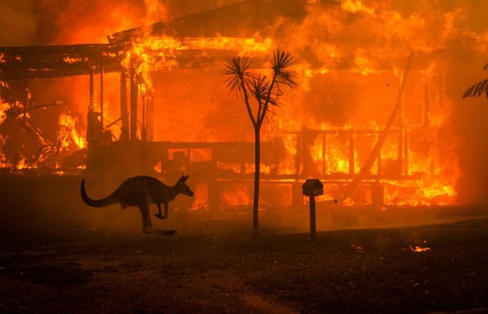 Связь между пожарами в Австралии и животноводством: изменение климата