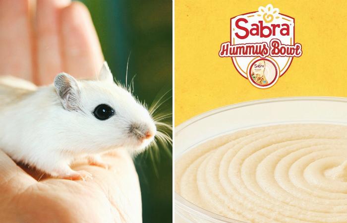 Вторая по величине израильская пищевая компания отказалась от тестирования на животных