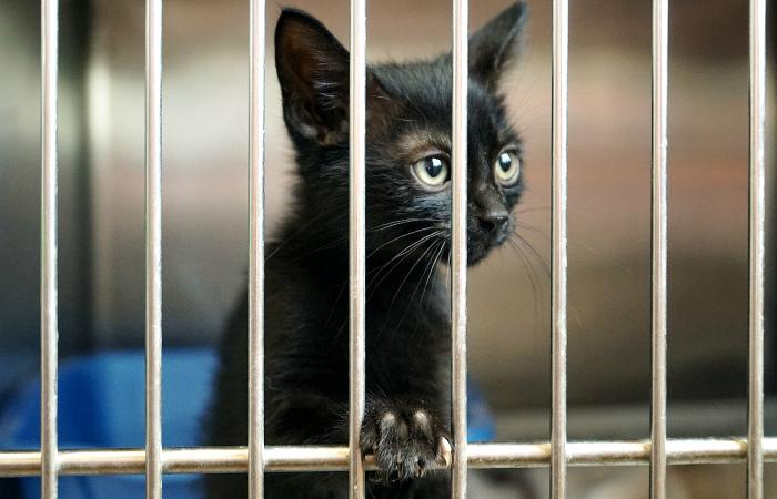 FDA ввело политику «выхода на пенсию» здоровых лабораторных животных: вместо усыпления их будут отдавать в приюты