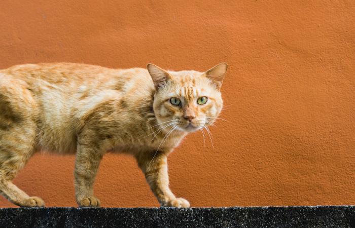 Правительство Кипра выделило 75 000 евро на стерилизацию бездомных кошек