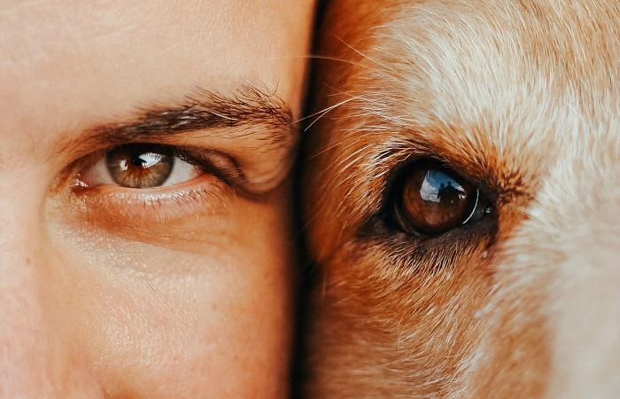Зоозащитники призывает к отказу от термина «питомцы», поскольку кошки и собаки «равны» нам