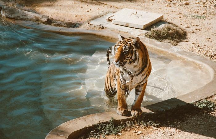 Лос-Анджелес запретил эксплуатацию диких животных ради развлечений