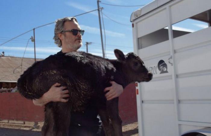 Хоакин Феникс спас корову и её новорожденного телёнка со скотобойни