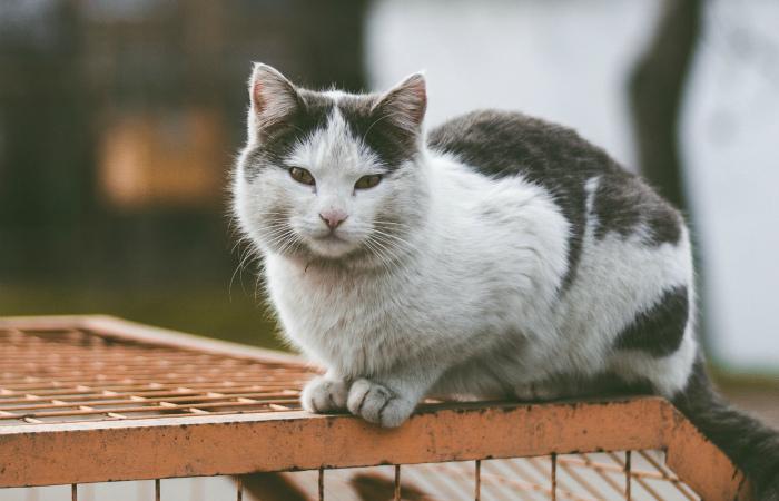 Верховная Рада Украины намерена улучшить благосостояние животных до уровня ЕС в новом законопроекте