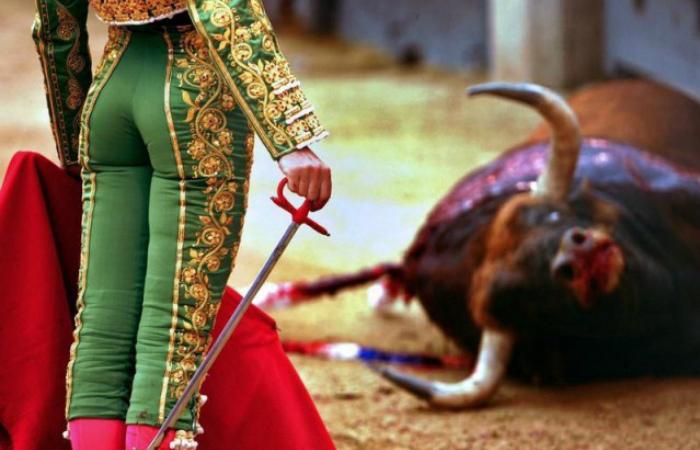 Из-за коронавируса в Испании отменили 21 корриду, что спасло 120 быков