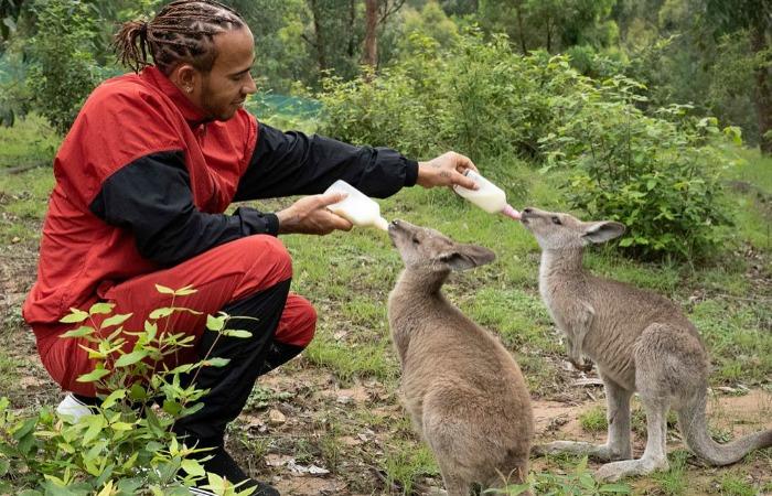 Льюис Хэмилтон посетил центр спасения диких животных в Австралии