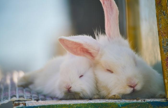 Сенат Мексики принял закон, запрещающий косметические испытания на животных