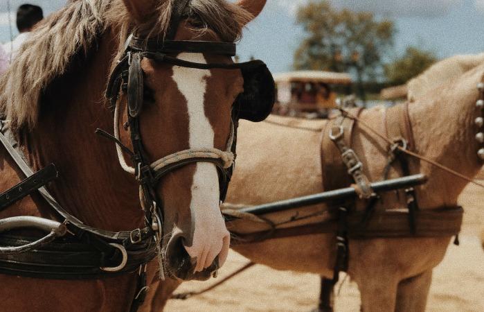 В Чикаго запретили конный экипаж