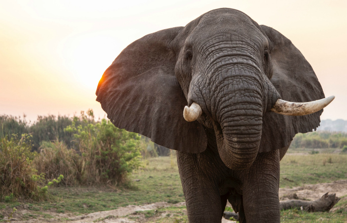 Столица США запретила торговлю слоновой костью и рогом носорога