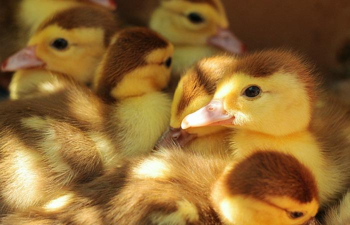 Всего за месяц в этом году было спасено как минимум 1 250 000 сельскохозяйственных животных