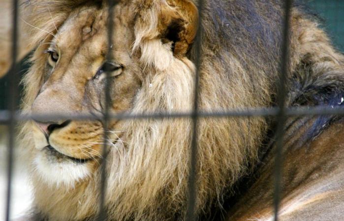 В Мадриде вступил в силу запрет на цирки с дикими животными