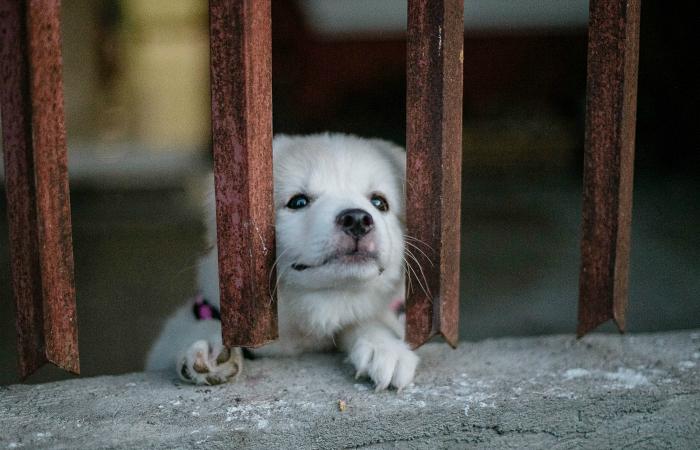 Шэньчжэнь стал первым городом Китая, который запретил торговлю и употребление мяса собак и кошек