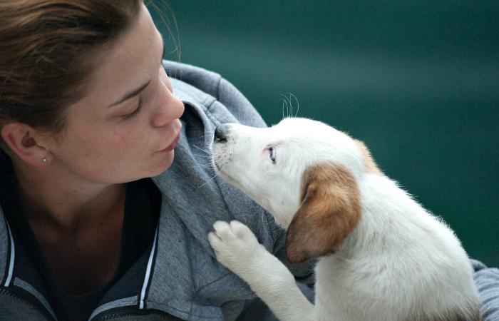 Ещё один город в Китае запрещает потребление мяса собак и кошек