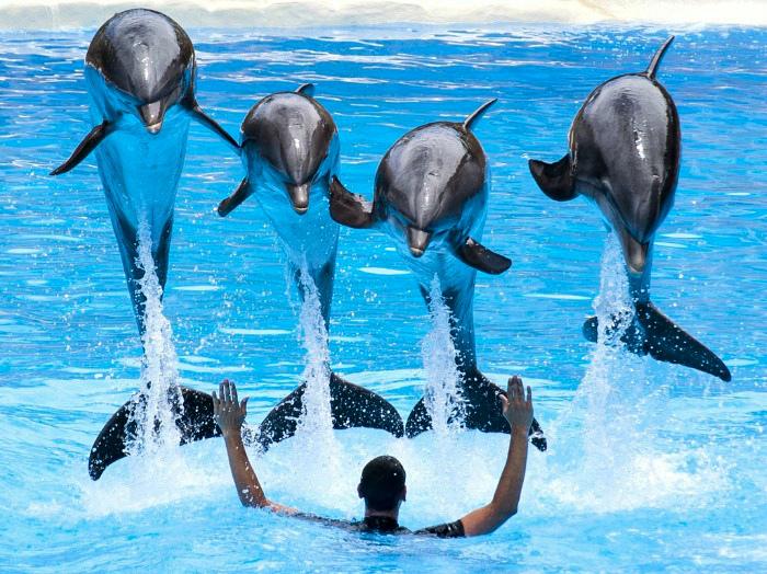 Океанический парк Гонконга на грани банкротства: надежда на завершение эксплуатации и разведения животных